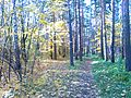 Tsentralnyy rayon, Chelyabinsk, Chelyabinskaya oblast', Russia - panoramio (69).jpg