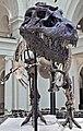 Tyrannosaurus rex (theropod dinosaur) (Hell Creek Formation, Upper Cretaceous; near Faith, South Dakota, USA) 21.jpg