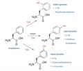 Tyrosine isomeren.png