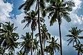 USAID Measuring Impact Conservation Enterprise Retrospective (Philippines; Nagkakaisang Tribu ng Palawan) (38483483020).jpg