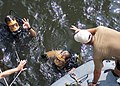 US Navy 050812-N-0057D-106 Senior Chief Boatswain's Mate Jim Prewitt, left, assigned to Explosive Ordnance Disposal Mobile Unit Twelve (EODMU-12), gives the OK sign to his diving supervisor.jpg