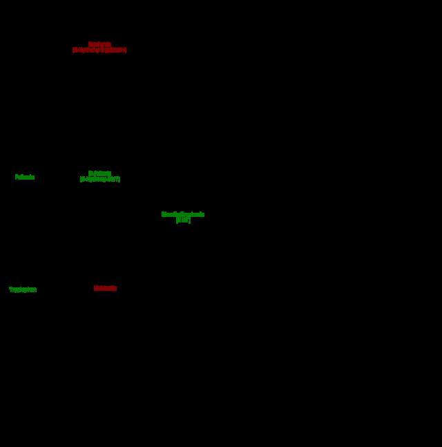 Körpereigene, pflanzliche und synthetische Tryptamine