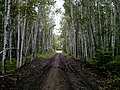 Ulchsky District, Khabarovsk Krai, Russia - panoramio (107).jpg