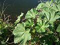 Unknown plant-16.jpg