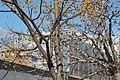 VIEW , ®'s - DiDi - Ð 6K - ┼ , MADRID CDM PEÑUELAS (PISCINA) - panoramio (11).jpg