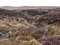Valley of the Tarn Burn - geograph.org.uk - 1185970.jpg
