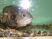 Varna Aquarium - Wikipedia