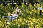 Vogelscheuchen im Weinberg bei Thayngen SH.jpg