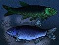 Wadeichthys oxyops.jpg
