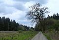 Wald bei Mödishofen 01.jpg