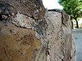 Wall - Lagos Zoo - The Algarve, Portugal (1736538918).jpg