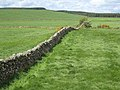 Wall near Carsegowan - geograph.org.uk - 435099.jpg