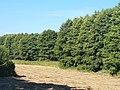 Wandlitz - Feld am Langen Grund (Field by Langer Grund) - geo.hlipp.de - 41819.jpg
