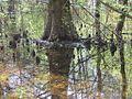 Wapanocca National Wildlife Refuge Crittenden County AR 037.jpg