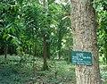 Wat Khung Taphao Herbs Garden.jpg