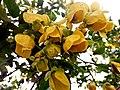Wayanadan-random-flowers IMG 20180524 153439 HDR (28504492898).jpg