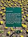 Wechselflor-Infoschild im Botanischen Garten Hof 20200406 05.jpg