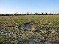 Wet grassland at Moor Farm - geograph.org.uk - 1652046.jpg