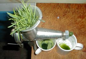 What is Wheatgrass? USDA, Myths and Powder vs Juice Comparison
