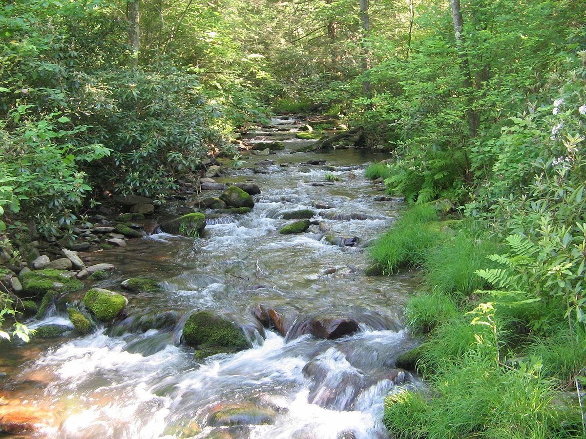 Tiadaghton State Forest - Wikipedia