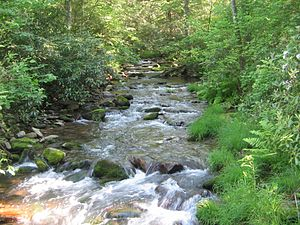 White Deer Hole Creek - White Deer Hole Creek near the Fourth Gap of South White Deer Ridge