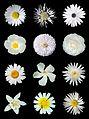 White flowers b.jpg