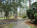 Whitehead Camellia Trail 2.JPG