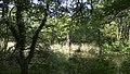 Wien 02 Prater Krebsenwasser c.jpg