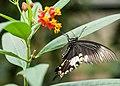 WilhelmaButterfly-pjt13.jpg