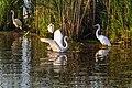 Williamstown, WI, USA - panoramio - NaturesFan1226 (28).jpg