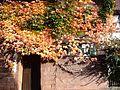 Winden (Pfalz) 15.jpg