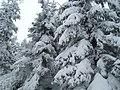 Winterzauber - Zittauer Gebirge - panoramio.jpg