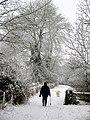 Wintry Walkies - geograph.org.uk - 333388.jpg