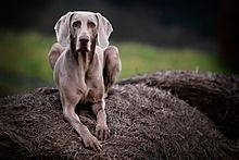 Image Result For Excel Dog Training