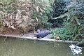 Wood crocodile @ Pond @ Parc Montsouris @ Paris (29527631064).jpg