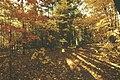 Woodland04 (27300059989).jpg