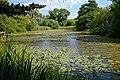 Woods Mill, Sussex Wildlife Trust, England - lake 01.jpg