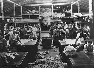 Burrawang, New South Wales - Wool classing and sorting at the shearing sheds of Burrawong, circa 1900.