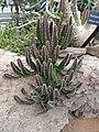 World Deserts - US Botanic Gardens 25.jpg