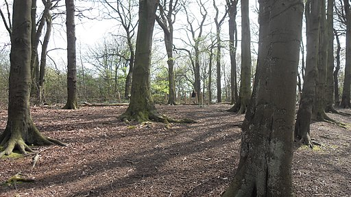 Worsley Woods - geograph.org.uk - 1759396