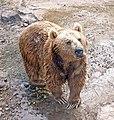 Yerevan Zoo - bear.jpg