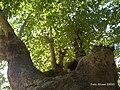 Yukarı Çağlar (Navahı) - Serper (Navahı bükü) (3) - panoramio.jpg
