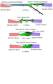 Zhao evolution diagram cross section.png