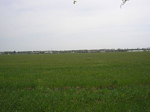 Zhemchuzhina 1.JPG