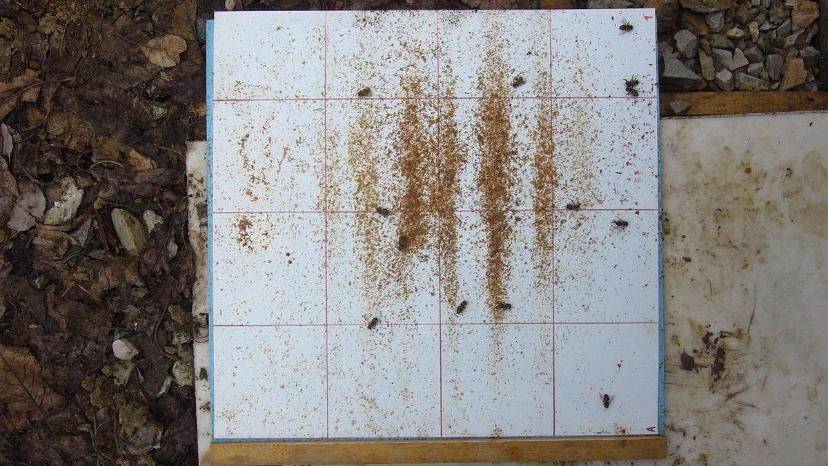Výsledek obrázku pro podložka včelí v zimě