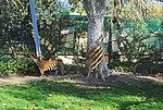 Zoo de Lisboa by Juntas 54.jpg