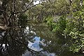 (1)Kittys Creek.jpg