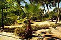 ® ┼ M.D. EL CAMPELLO VILLA MARCO JARDÍN - panoramio (12).jpg