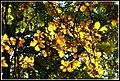 Őszi színek 4 - panoramio.jpg