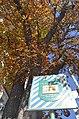 Вікові липи, каштани, ясени зростають по вулиці Володимирській.jpg